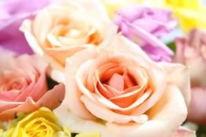 パステルカラーのバラ